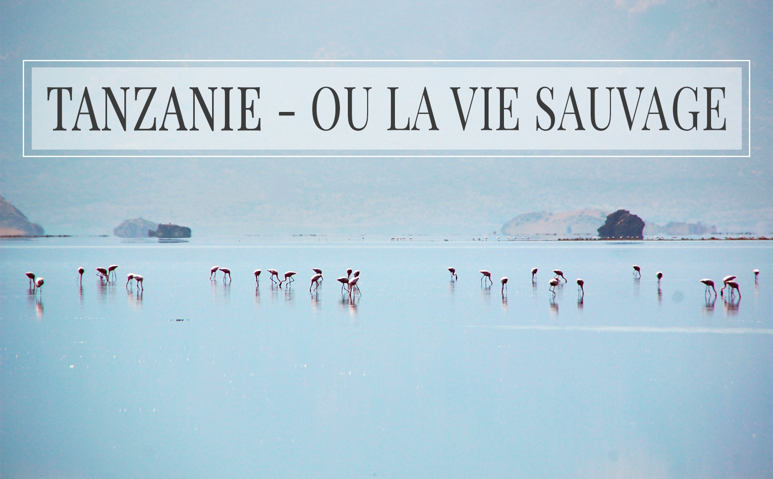 Tanzanie, ou la vie sauvage