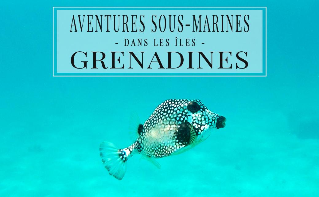 Aventures sous-marines dans les Grenadines